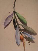 Emma Douglas 'Olive Branch'